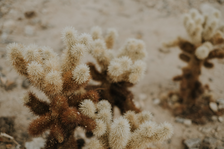 San Diego desert cactus